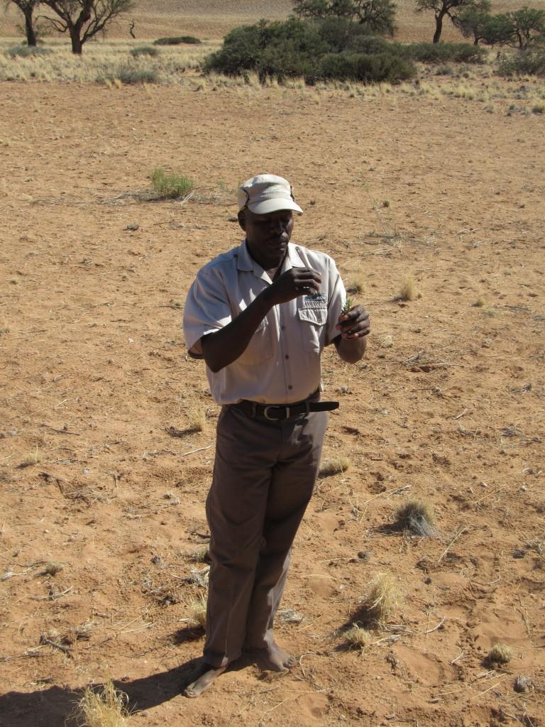 Bushman guide